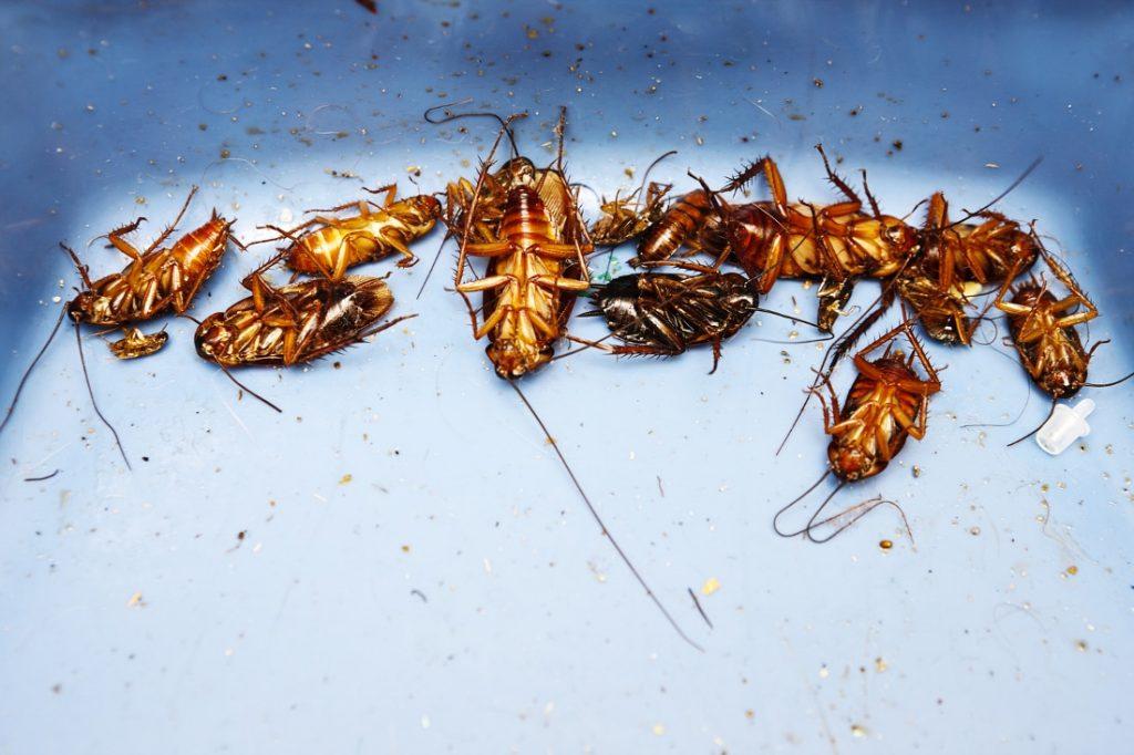 pest-extermination-hero-banner-image